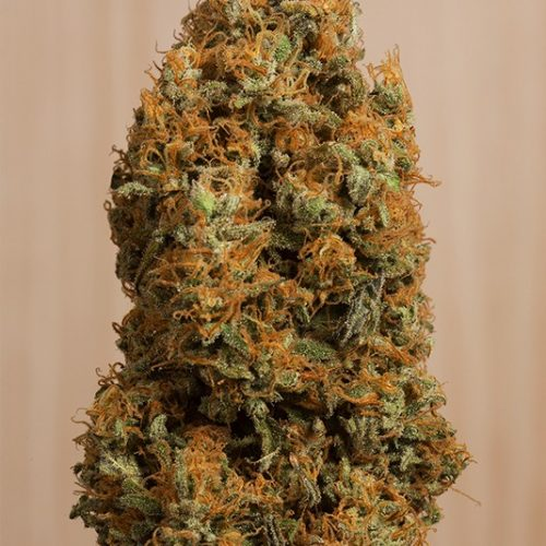 Green Crack CBD Feminized - 420seeds.ca