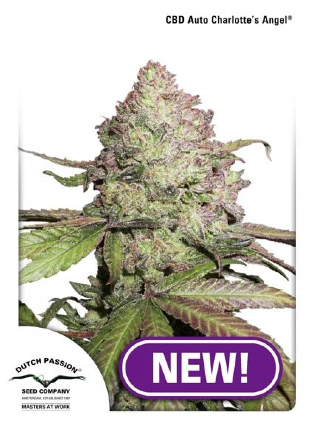 Charlotte's Angel CBD AUTO Feminized - 420seeds.ca