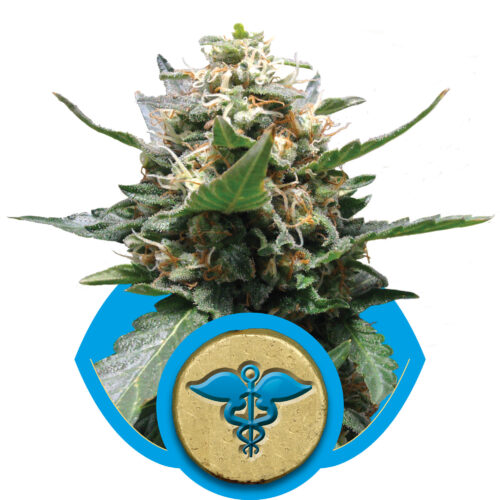 Royal Medic Feminized - 420seeds.ca