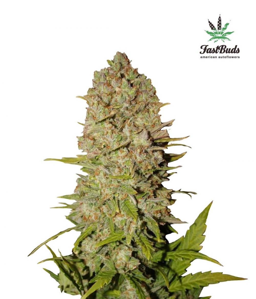 Pineapple Express Auto Feminized - 420seeds.ca